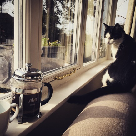 Cat coffee chill